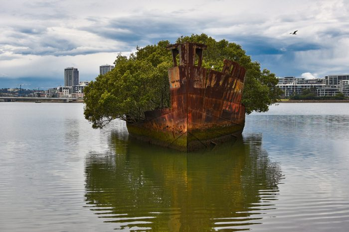 Homebush Bay, Sydney, NSW / Australia - August 25th, 2018. SS Ayrfield Shipwreck with rusting hull taken over by the mangroves.
