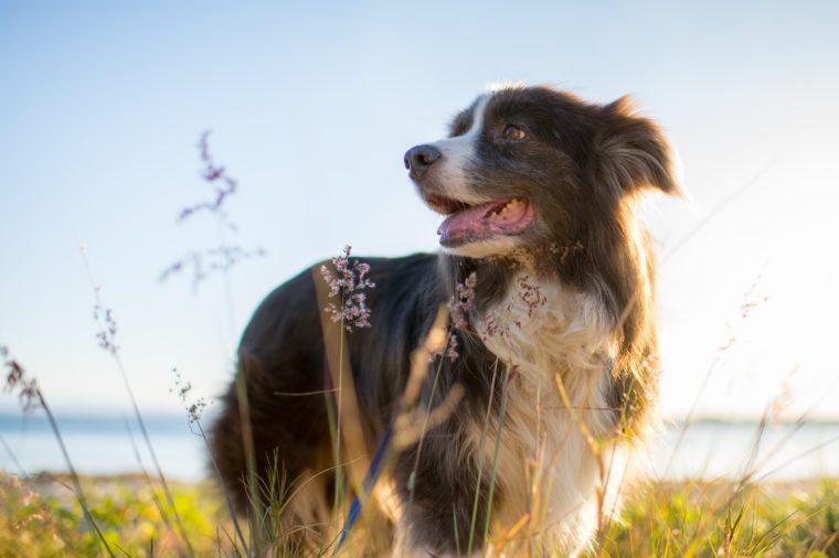 Happy dog in dunes