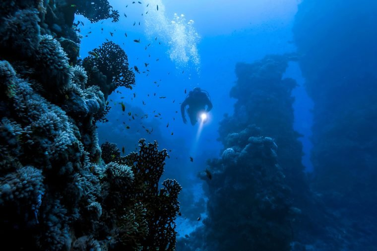 Underwater diver in underwater world landscape