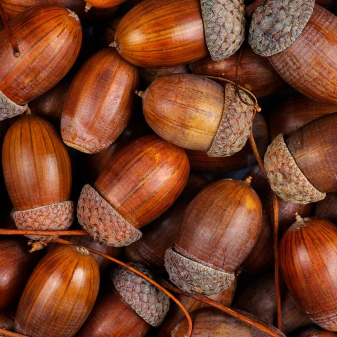 8 Things You Can Make With All of Those Acorns