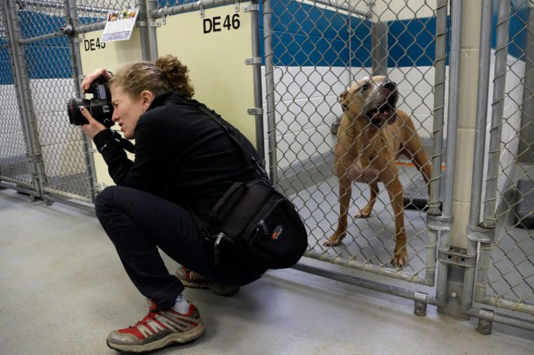 photographer in dog shelter