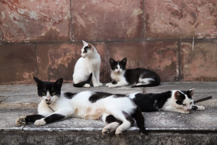 A street cat female is having a rest with her kittens in the street