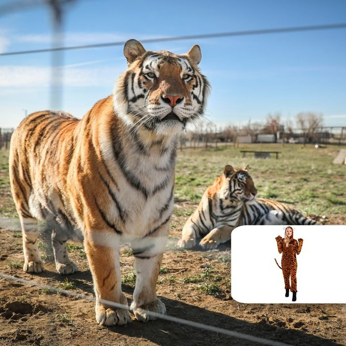 Tiger King & his crew