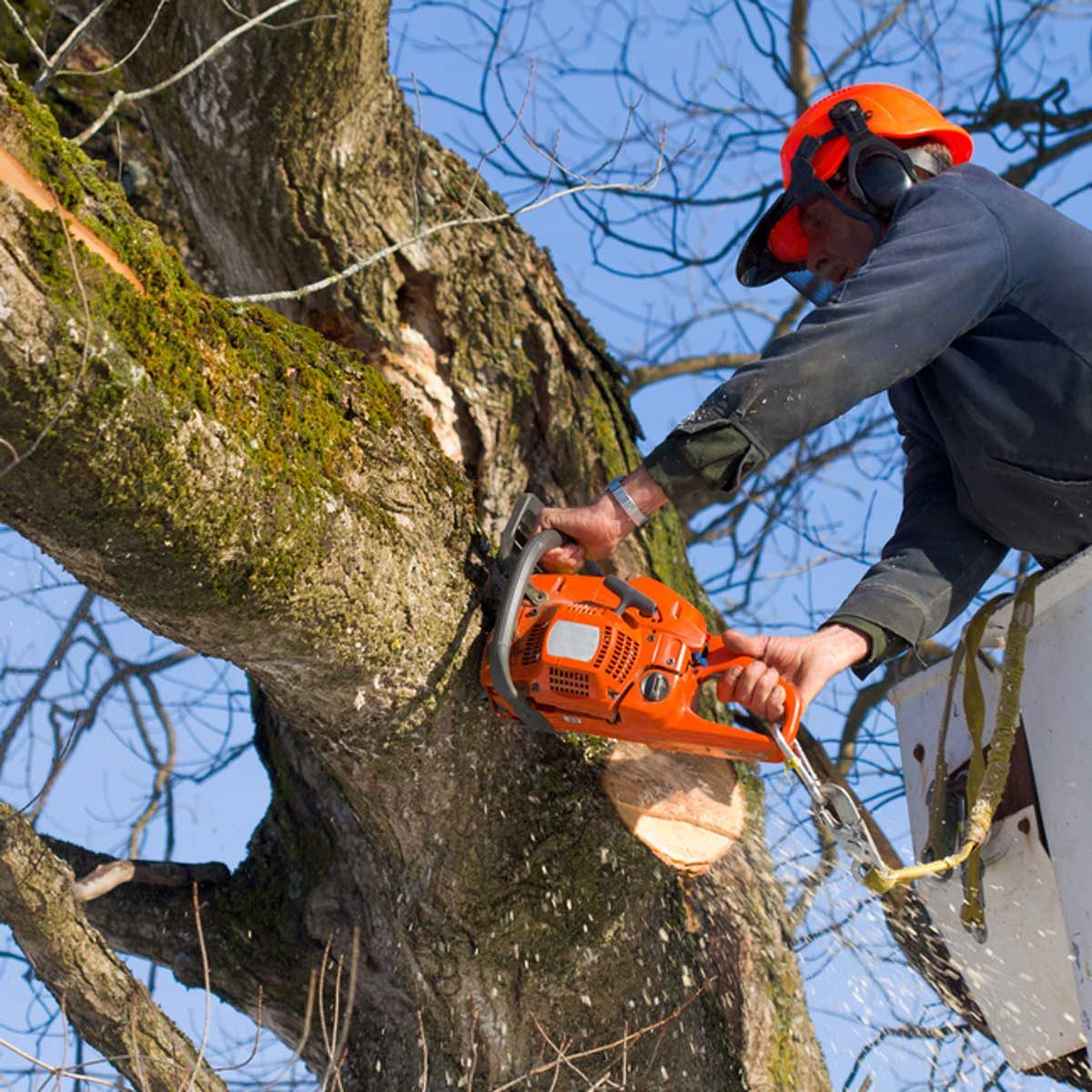 tree removal_89598097