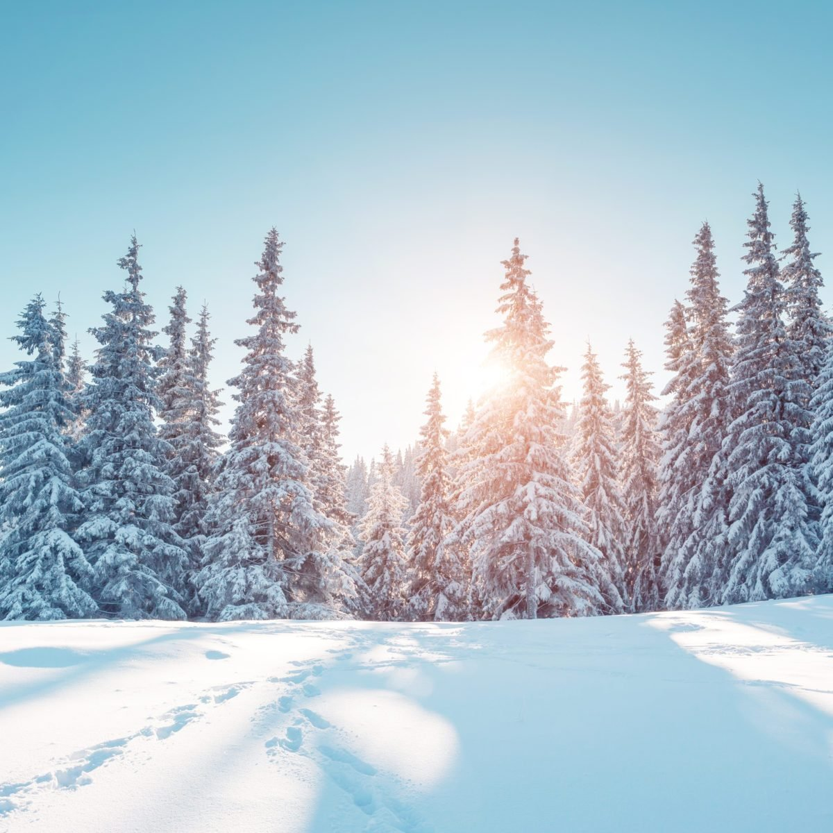 15 Chilling Facts You Never Knew About the Winter Solstice