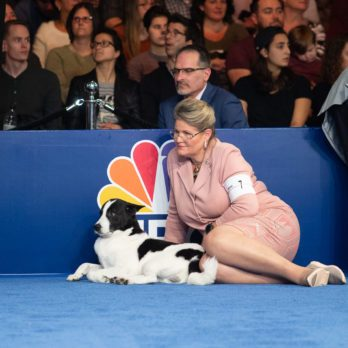14 Behind-the-Scene Secrets from the National Dog Show
