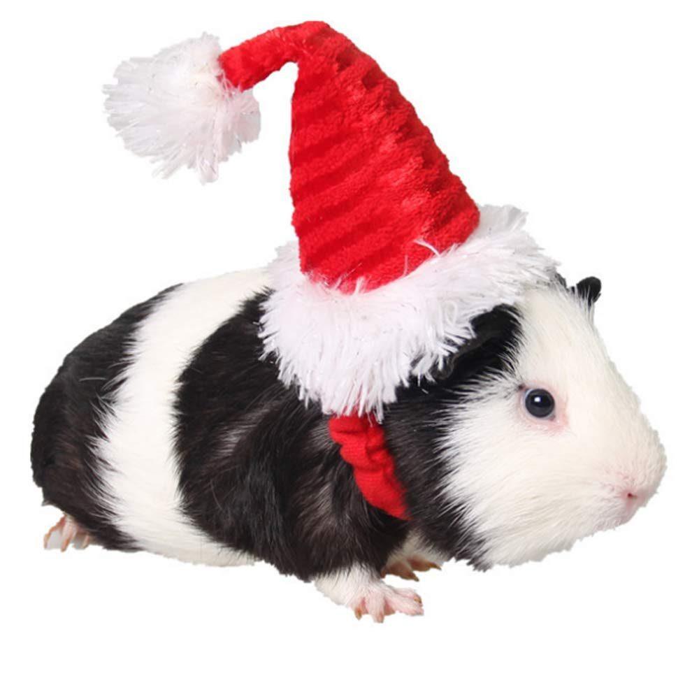 santa hat guinea pig