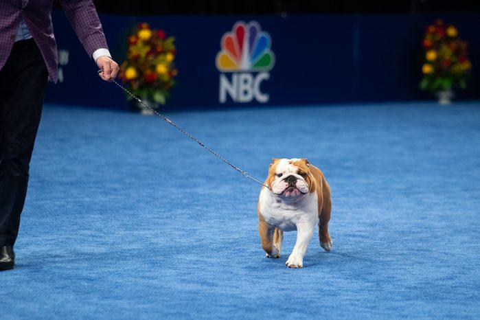national dog show purina