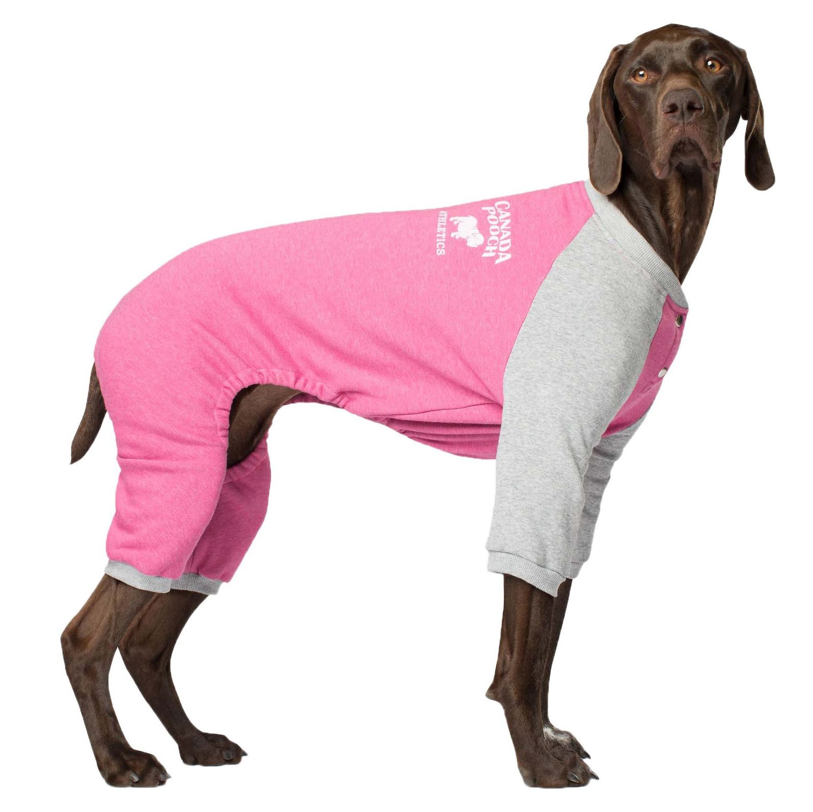 dog jumpsuit