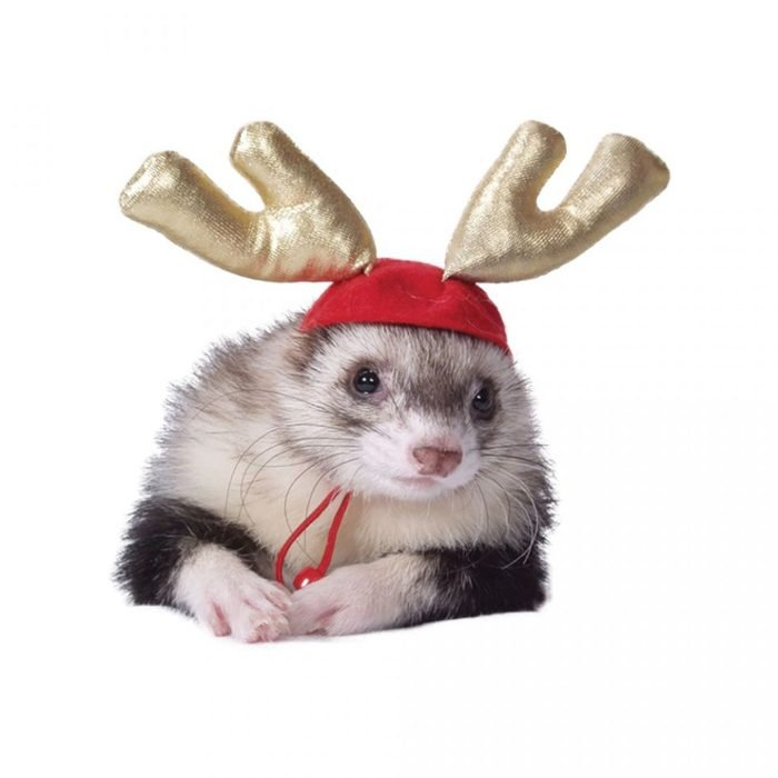 holiday antlers for ferrets