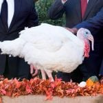 What Happens to the Turkey Pardoned by the President?