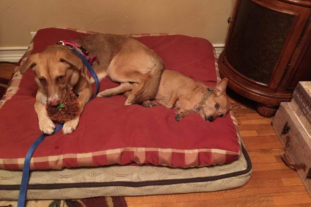 Barbara Hinske's dogs