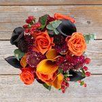 Plant for Autumn Color