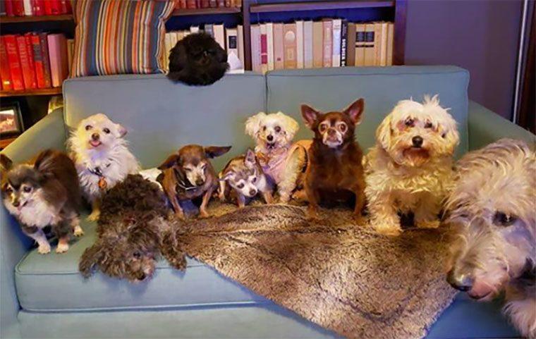 steve greig's dogs