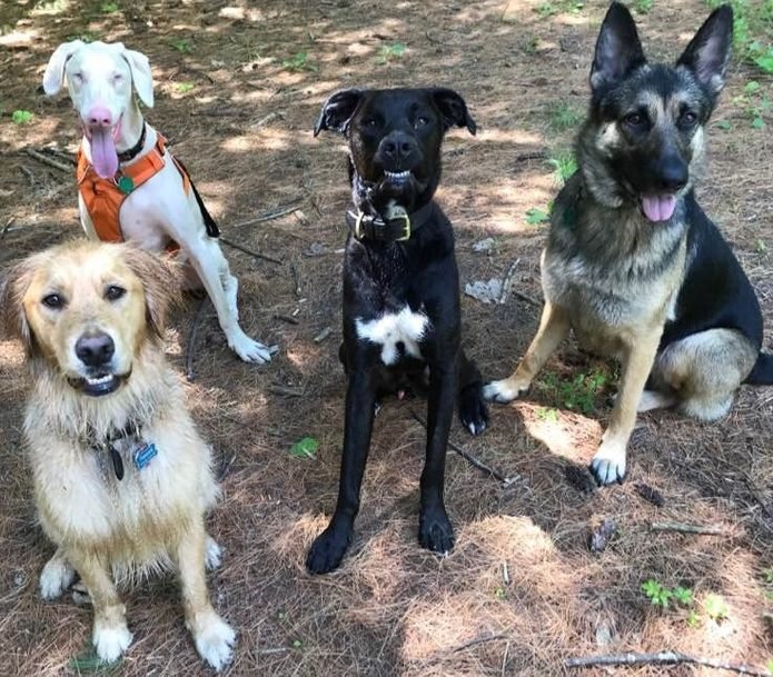 group of four dogs pose for a photo