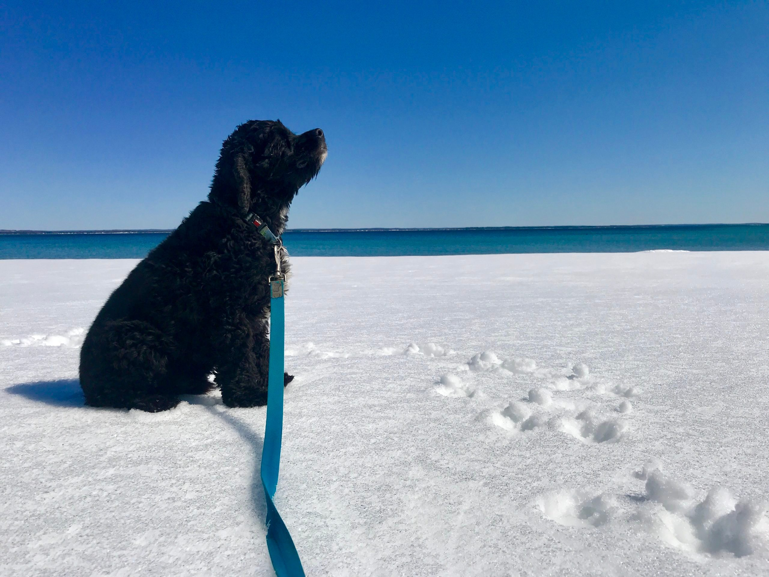 dog on a leash sitting in a snowy landscape near a body of water on a sunny day