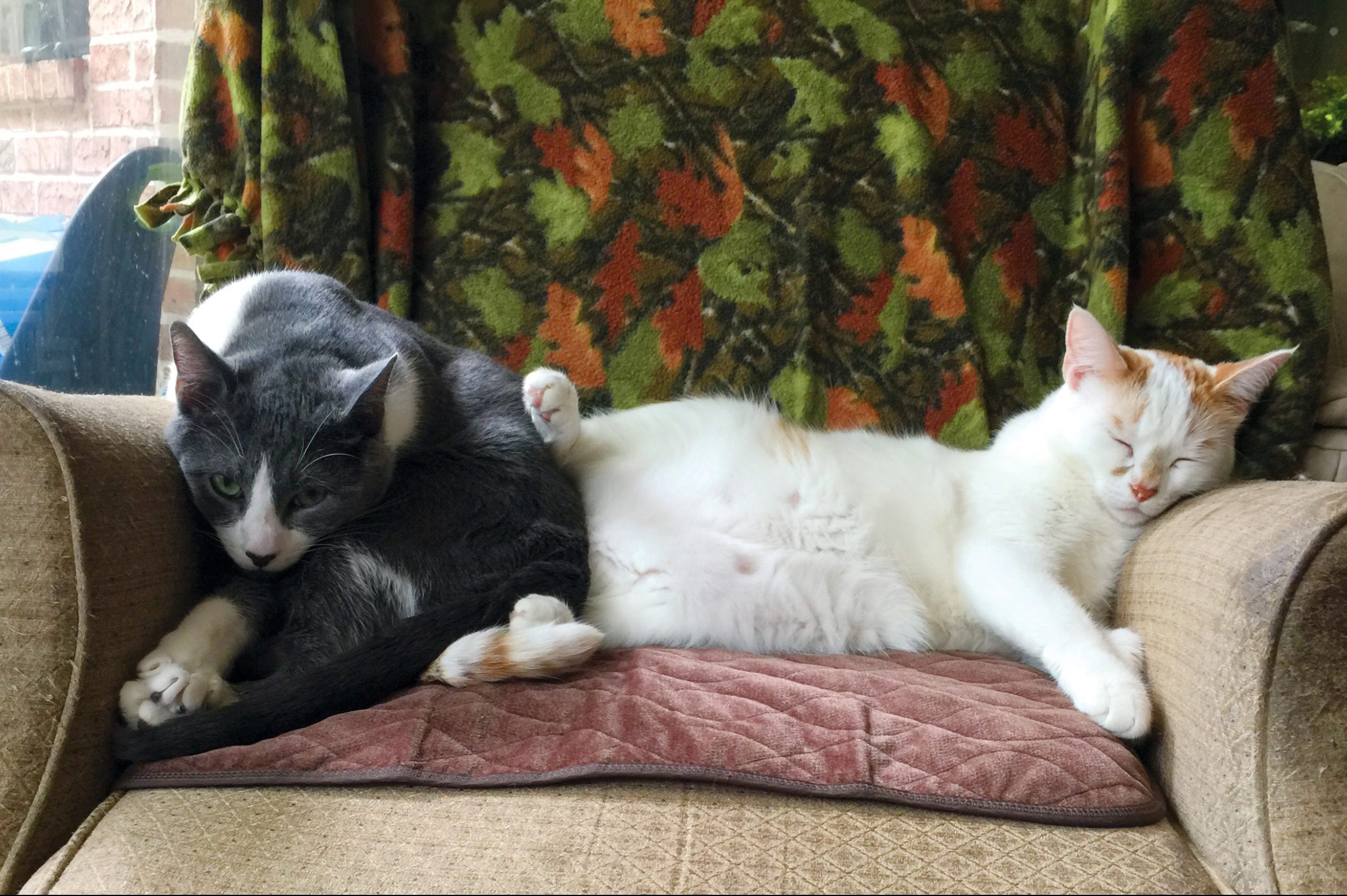 two cats sharing one seat; one cat is pushing the other to have more space