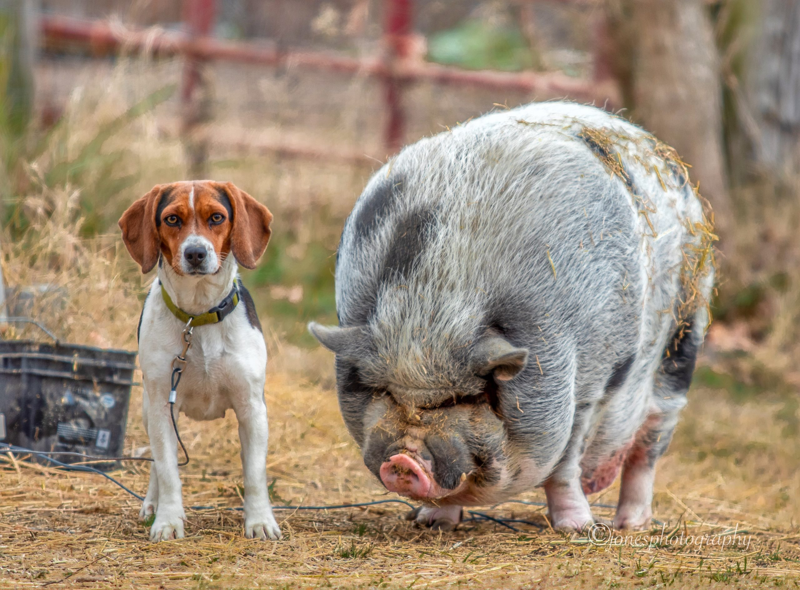 a dog and a pig pose for a picture