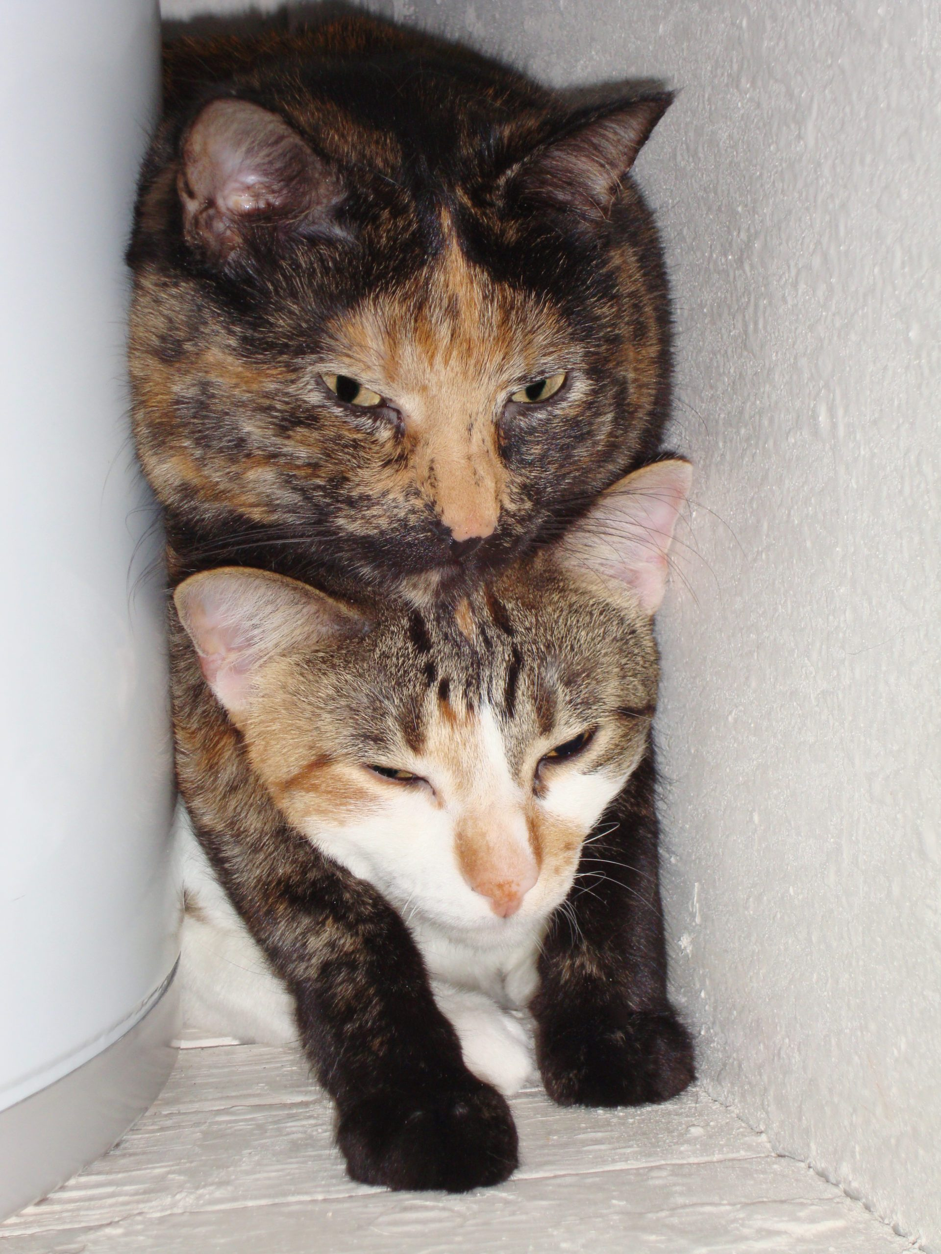 two cats, one on top of the other, squished in a small space