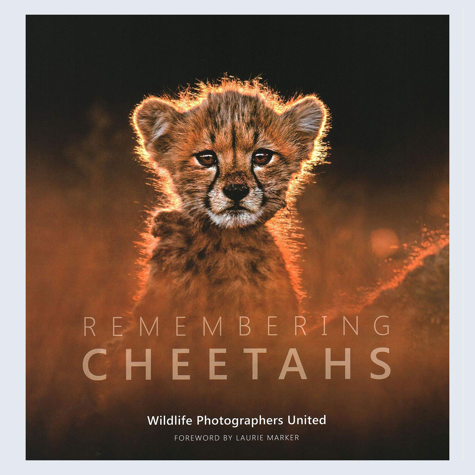 Remembering Wildlife Remembering Cheetahs