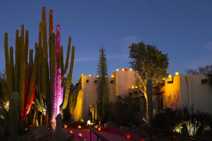 Las Noches De Las Luminarias (the nights of lights) at the Desert Botanical Garden in Phoenix