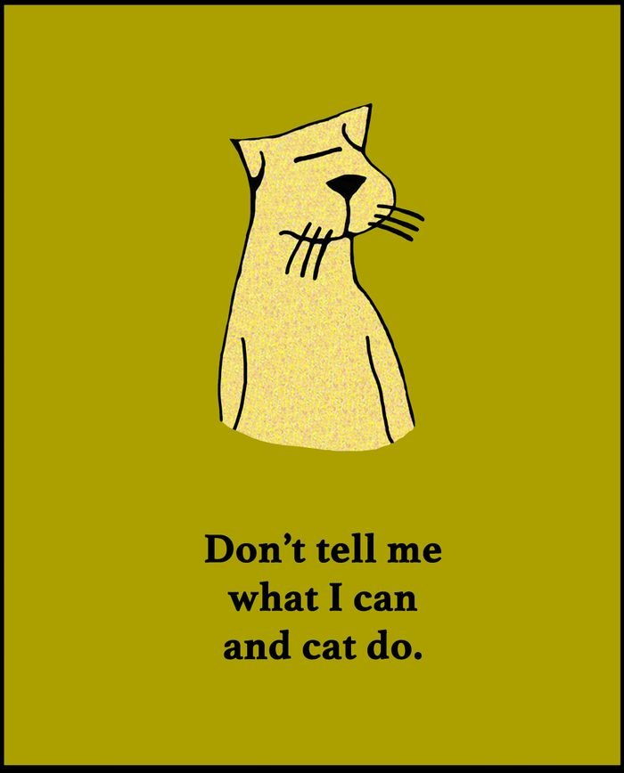 Cartoon illustration of a yellow cat and a play on words about what the cat can and 'cat' do.