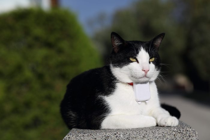 Cat with GPS Tracker