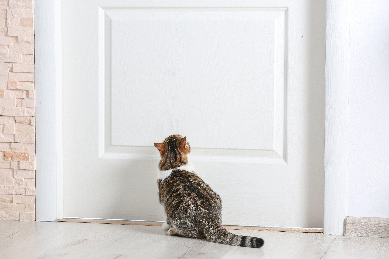 Cute funny cat near door at home