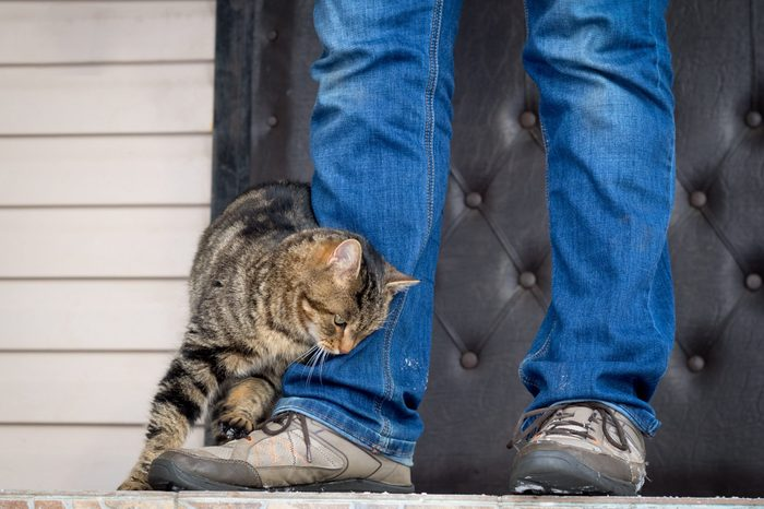 The cat rubs against the feet of the master on the porch