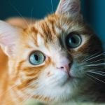 Does My Cat Love Me? 12 Ways Your Cat Secretly Shows Affection