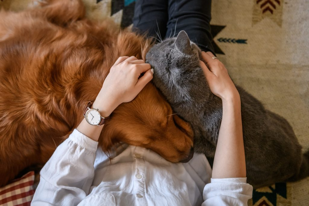 Hug the cat and the dog