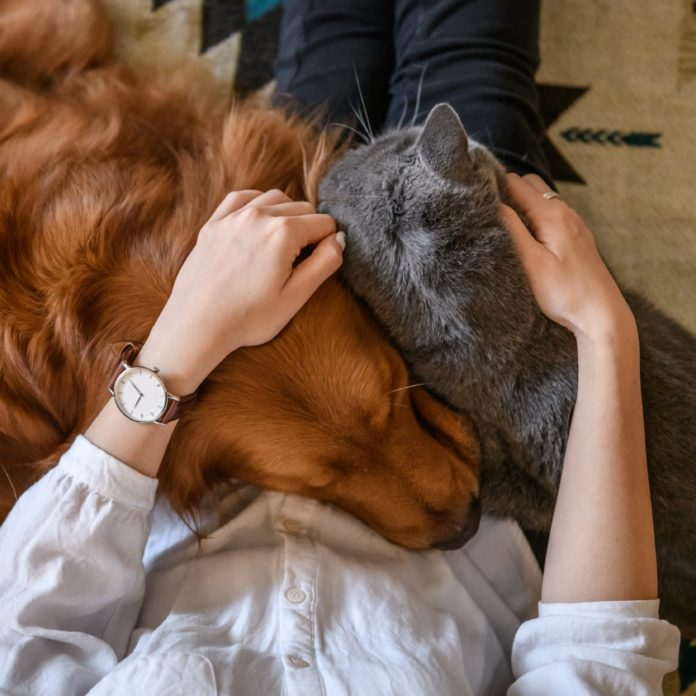 How to Solve the Most Common Pet Behavioral Problems