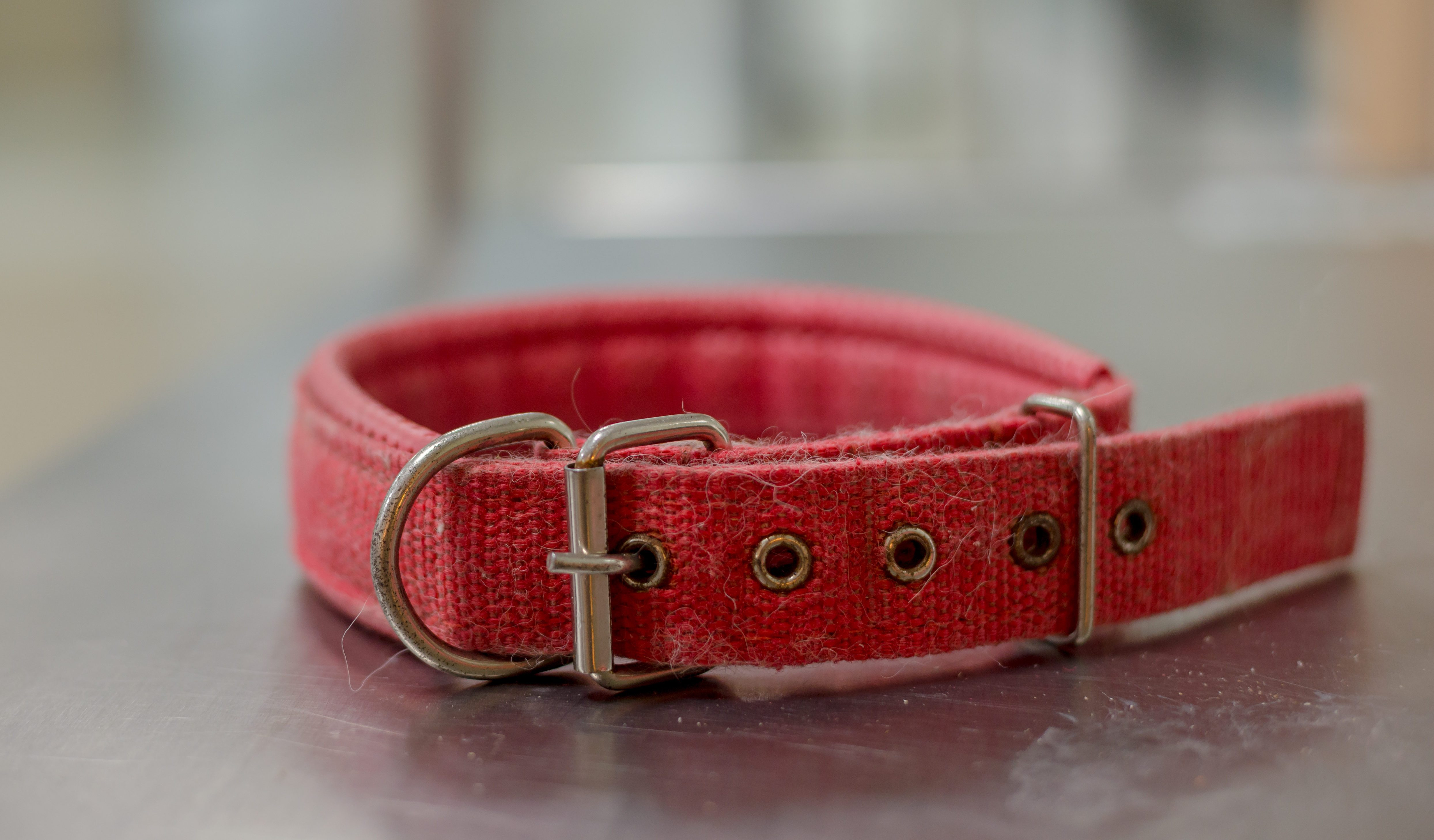 A red dog collar on the stainless steel table In animal hospital