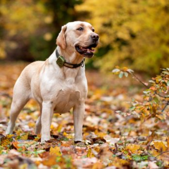 8 Best Pet GPS Trackers