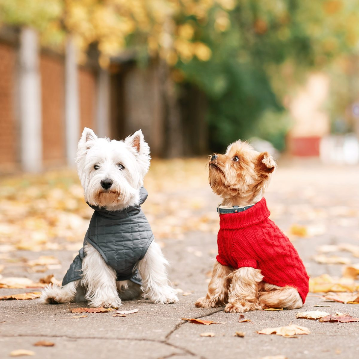 12 Coziest Dog Coats for Winter