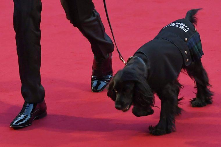 James Middleton Dog on red carpet