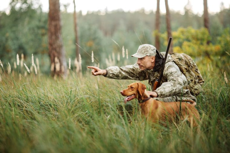 Hunter with Rifle and Dog in forest