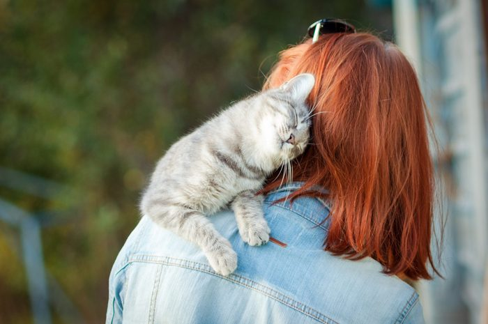 Grey tabby cat sitting on a shoulder at the girl. Outdoors