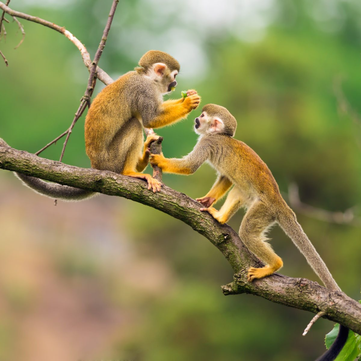 How Many Types of Monkeys Are There in the World?
