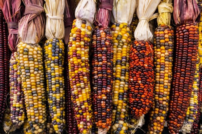 Bountiful Indian Corns