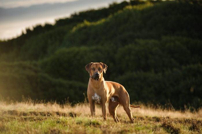 quiet dog breeds