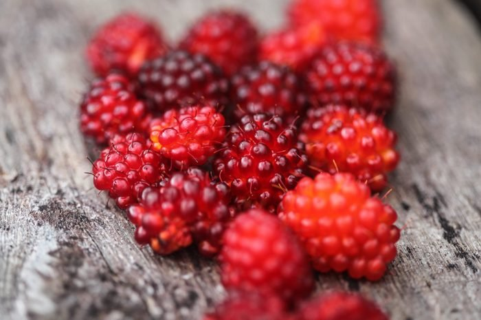 Still life wild red summertime berry of bramble species/Closeup of Dark and Rosy Red Edible Salmon Berries