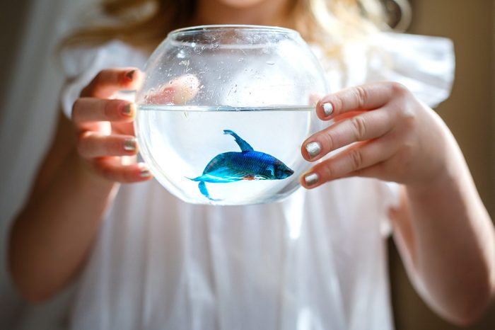Baby girl in white dress holding a aquarium with blue fish. The concept of care for Pets. Gift. Selective focus