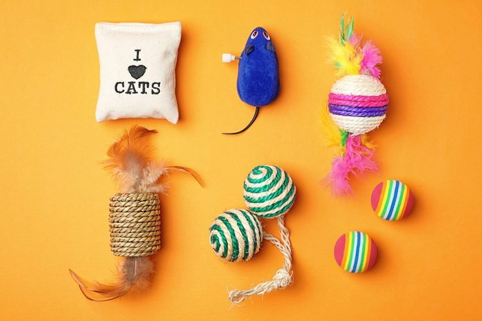 Flat lay composition with accessories for cat on color background. Pet care
