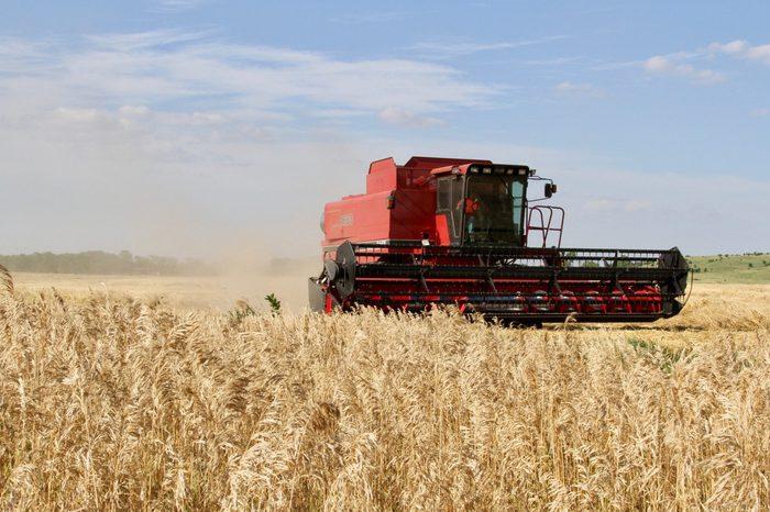 Kansas Wheat Field Harvest 2019