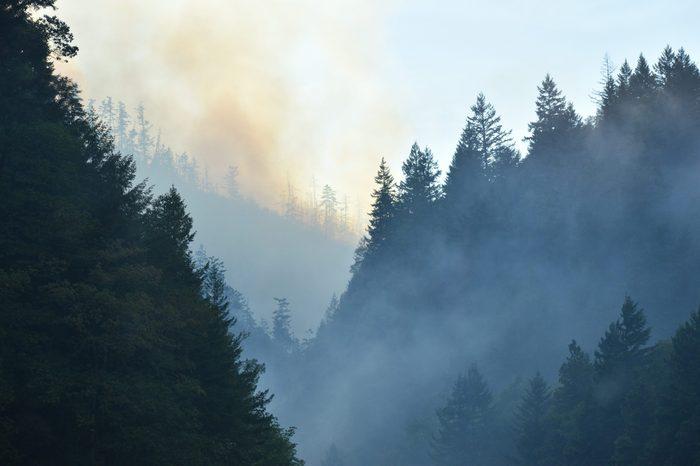 cheney washington forest fire