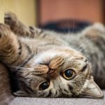 12 Telltale Signs Your Cat Is Happy