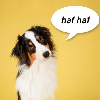 How Dogs Bark in Different Languages