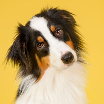 The Most Popular Dog Names from 2019