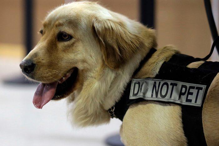 TSA service dog